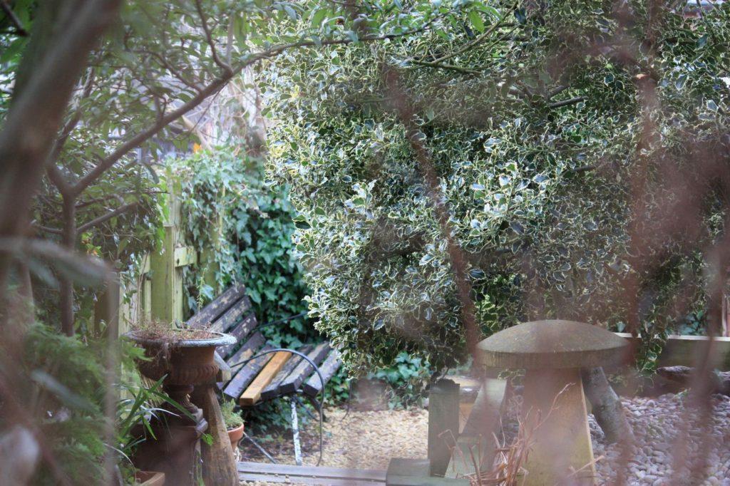 Close up garden 3
